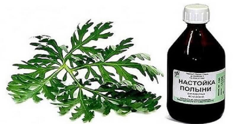 Այս բույսը հզոր միջոց է բազմաթիվ հիվանդությունների դեմ պայքարում